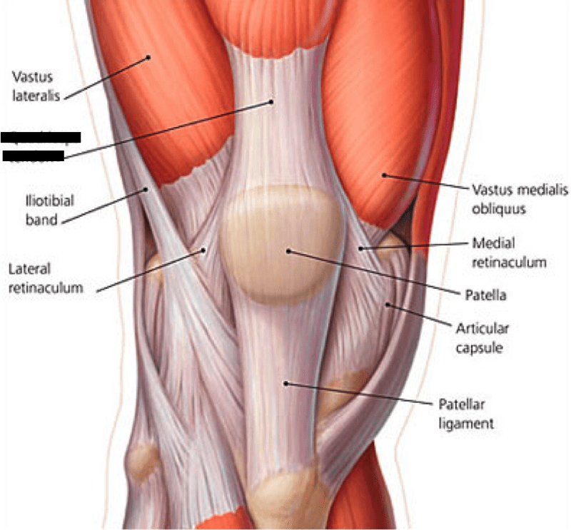 medial lower leg muscles diagram remote start wire calf nerve great installation of wiring extremity flashcards easy notecards pain in plantaris