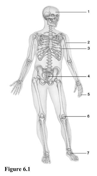 Chapter 6 Anatomy And Physiology Answers