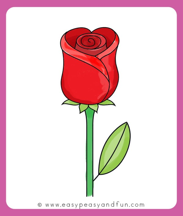 Draw Rose - Easy Step Beginners And