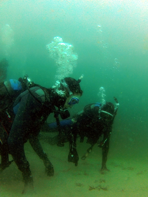 Dive N' Surf students make their first ocean off of Veteran's Park in Redondo Beach. Photo by Chelsea Sektnan: Jim Caldwell Redondo Beach