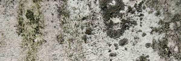 muffa sui muri