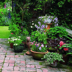 Potted Perennials For Container Gardening Plants Flowers And Shrubs
