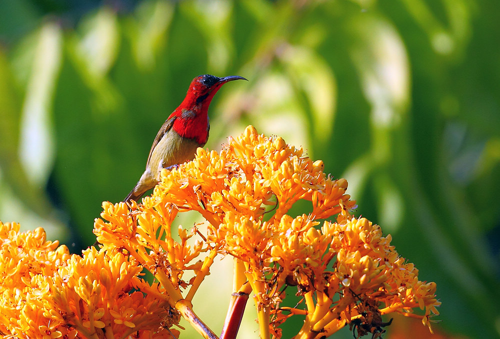Xishuangbanna Bird-watching