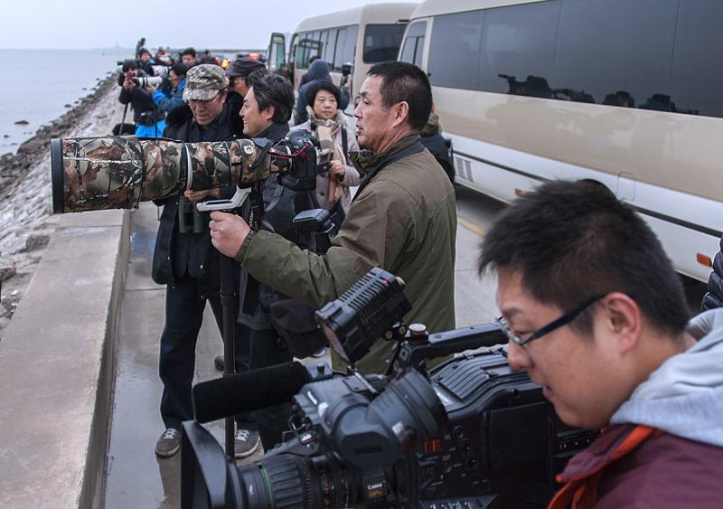 Tianjin Birding tour