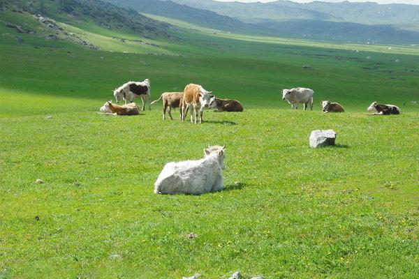 Tianshan Mountains, Xinjiang China