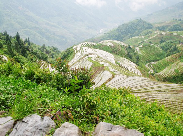 Longji Rice Terrace, Guilin Hiking