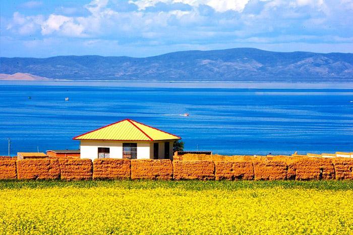 Qinghai Lake with Rape Flowers