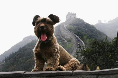 China Tours with Pet