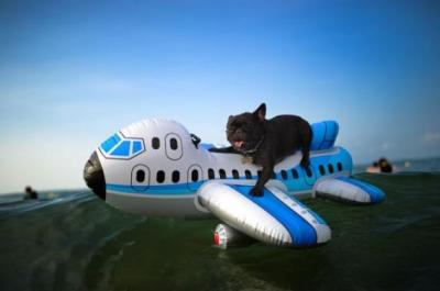 Air Travel in China with Dog
