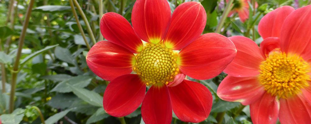 Flowers in Tasmania
