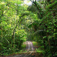 Panama rainforest tours, Pipeline Road