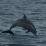 View Of Dolphins