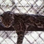 Summit Zoo Panama