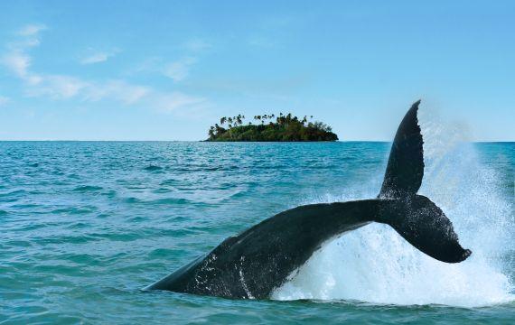 Rarotonga : Laguna en Rarotonga - Islas Cook