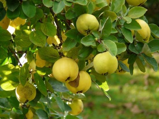 Obst und Gemüse Herbst
