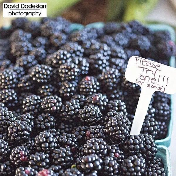 Schartner Farms's blackberries