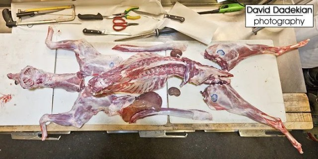 The entire butchered animal laid out on the cutting boards