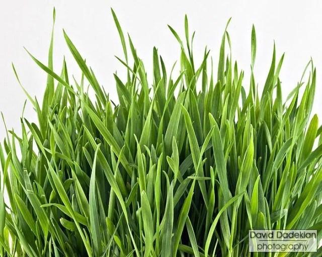 Allen Farms Wheatgrass