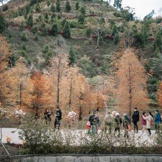 苗栗景點|三灣落羽松神美秘境 台版日本嵐山茂密竹林