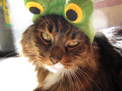 Emeril in his frog costume