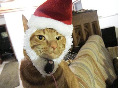 Reeses in Santa hat