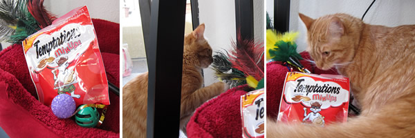 Picture collage of Max playing with his Christmas presents