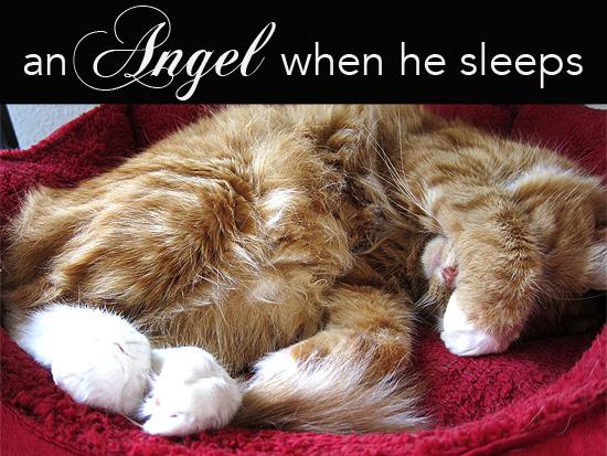An Angel when he naps. #Max #Cat