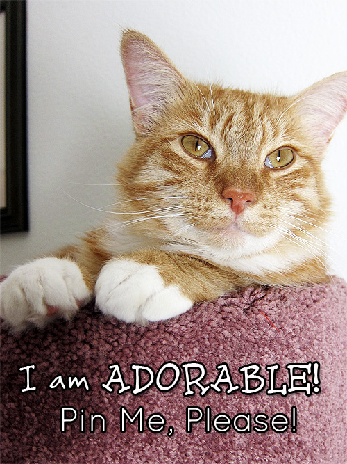 I am adorable. Pin me please.