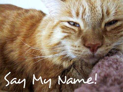max - say my name!