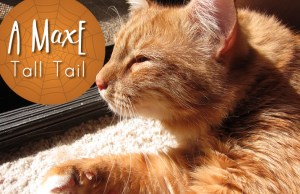 A MaxE Tall Tail: The Case of the Missing Mama | www.EatLaughPurr.com