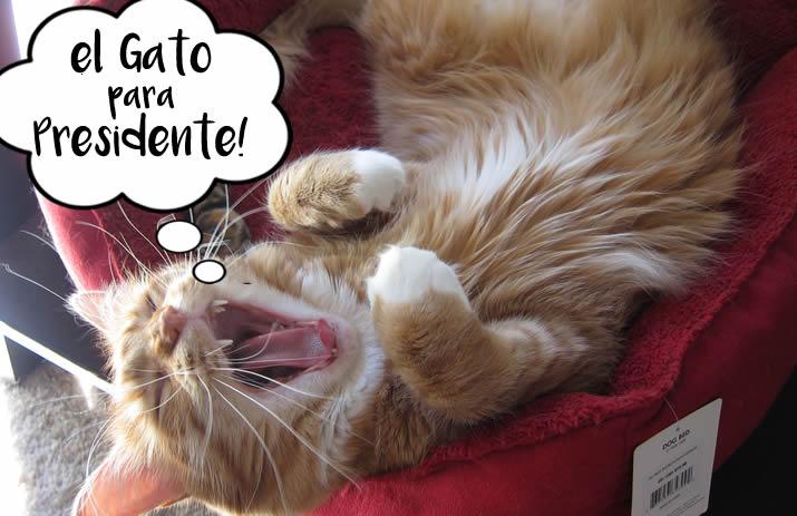 Max Mondays: El Gato Para Presidente
