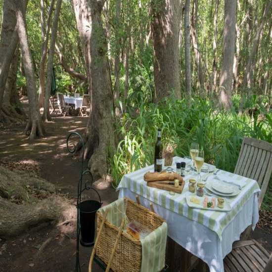 A well prepared picnic in the Forest at Vergelegen. Photo Supplied