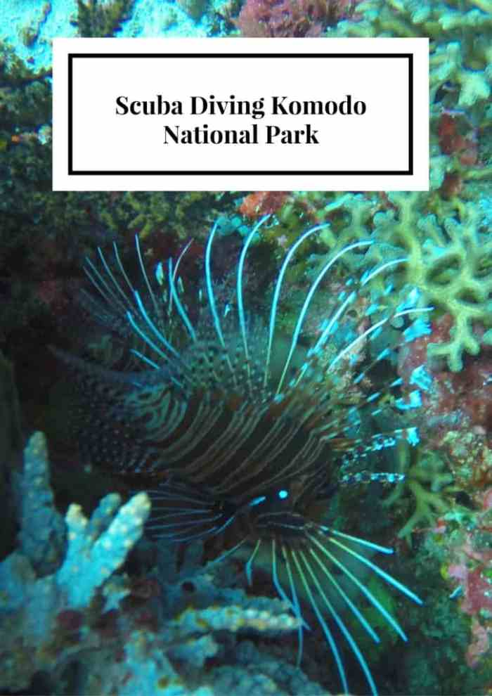 Scuba Diving Komodo National Park  U2013 Eat Sleep Breathe Travel