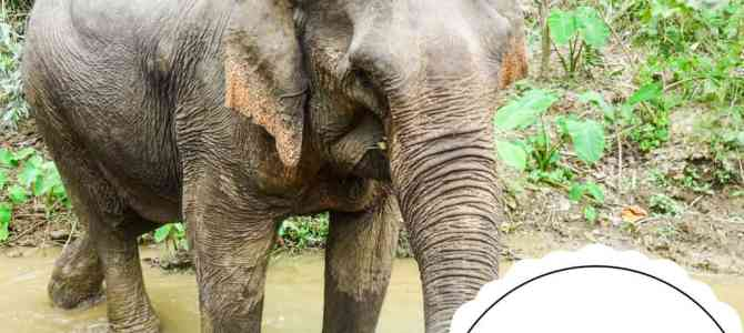 MandaLao Tours: Responsible Tourism with Elephants in Laos
