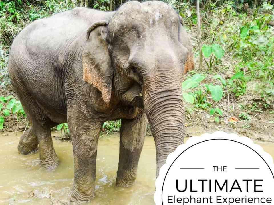 MandaLao Elephant Tours