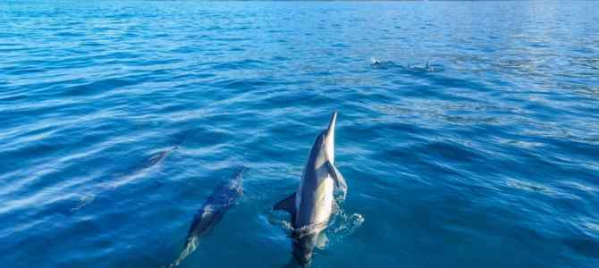 Swimming with Dolphins in Oahu, Hawaii: The Ethical and Responsible Way
