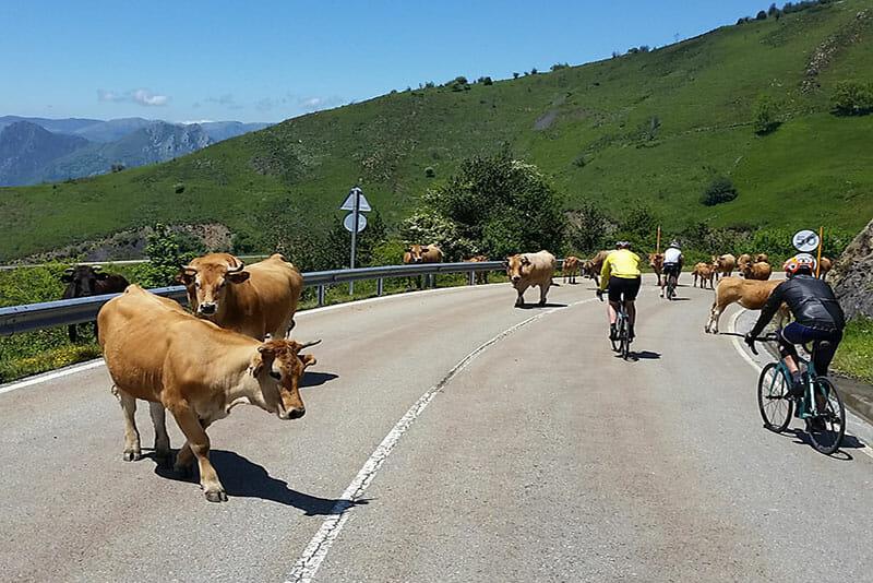 Cycling-Holiday-Spain-Eat-Sleep-Cycle-Trans-Asturias-Challenge