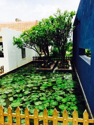 Lotus pond without lotuses!