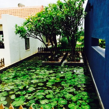 Lotus pond without lotuses!