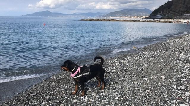 Dog-friendly in Italy