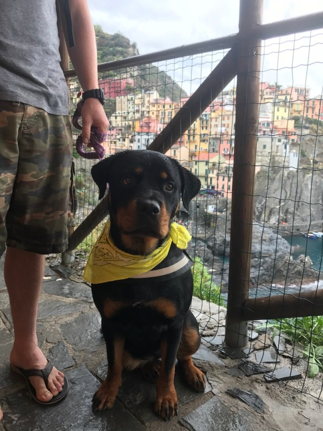 Dog-friendly in Italy