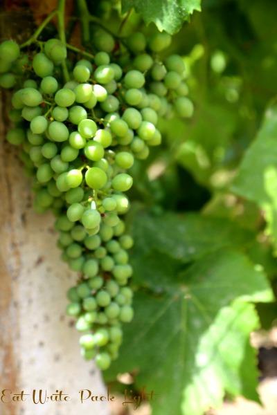Sicilian Grapes