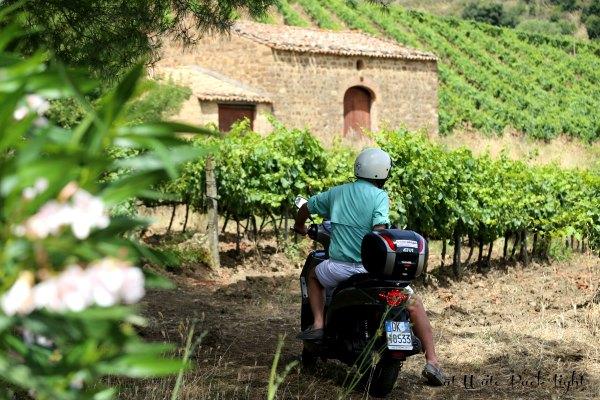 Sicily Vespar James vineyard