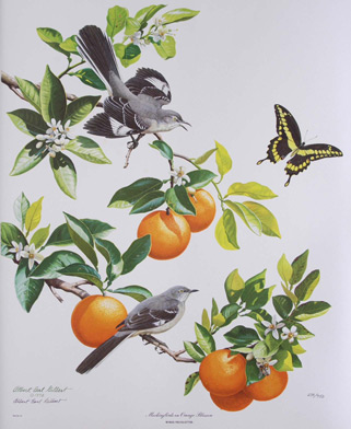 Albert Earl Gilbert Mockingbirds on Orange Blossom
