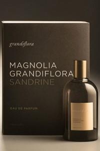 Magnolia Grandiflora Sandrine