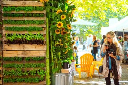 Seattle Urban Garden