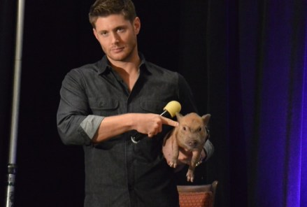 Supernatural with pig