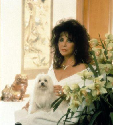 Elizabeth Taylor dogs