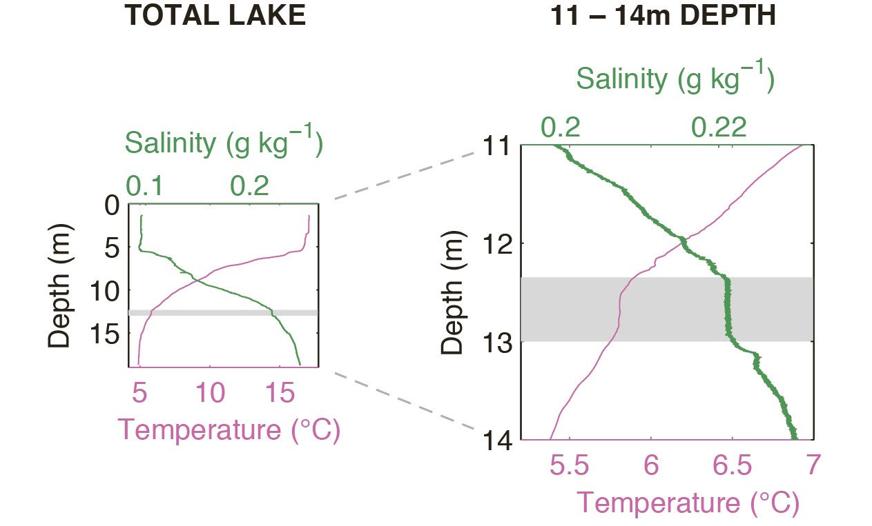 hight resolution of temperature and salinity profiles at a depth of 11 14 metres in lake cadagno the nearly uniform mixed layer is clearly visible at a depth of around 12 5