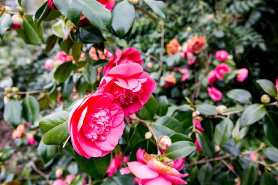 Blarney Castle Grounds are beautiful, flowers